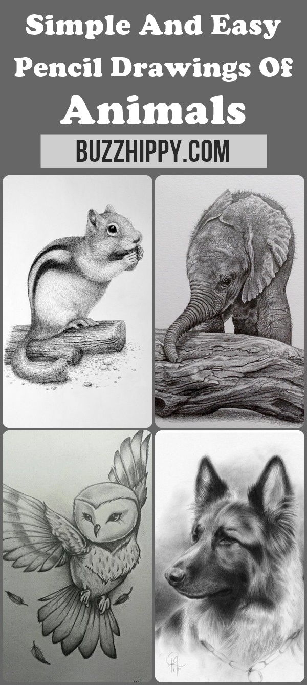 42 simple and easy pencil drawings of animals buzz hippy