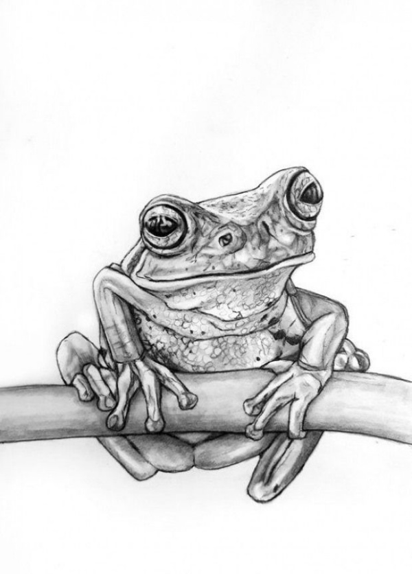 Simple And Easy Pencil Drawings Of Animals